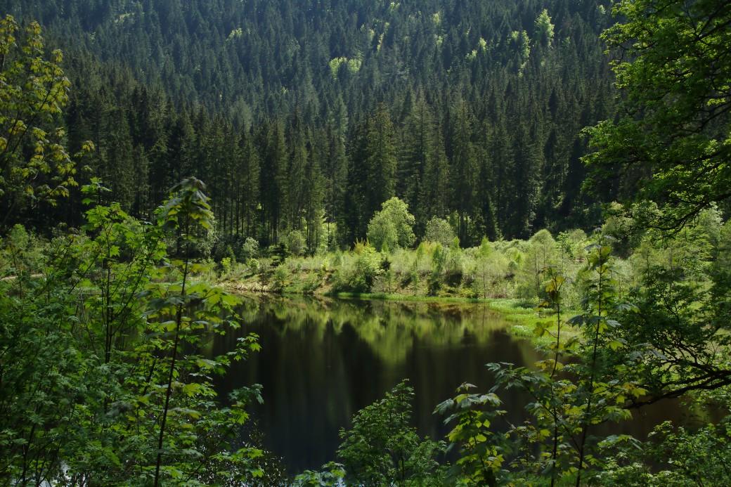 Vista do Lago Sankenbach, atrativo natural de Baiersbronn com trilha circular ao redor de suas águas