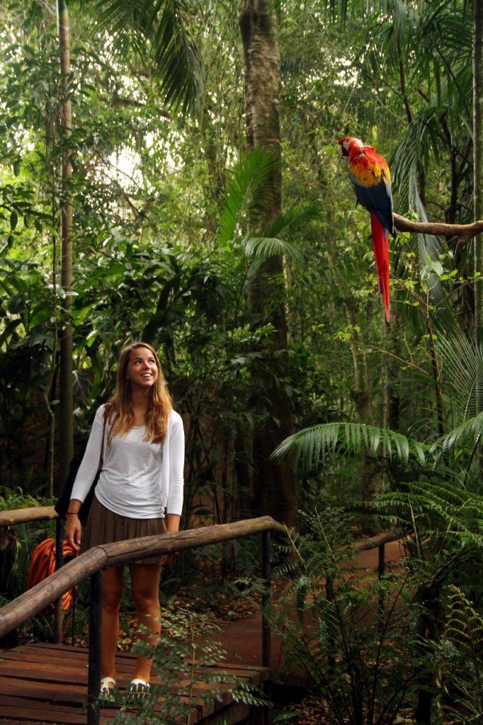 Criado em 94 pelo casal de ingleses Dennis e Anna Croukamp, o Parque das Aves abriga, aproximadamente, 1.100 animais, e uma área de 16,5 hectares (foto: Eduardo Vessoni)