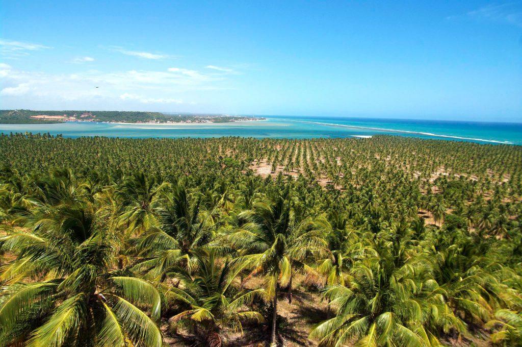 Barra do São Miguel, uma das portas de entrada para a Praia do Gunga, em Alagoas (foto: Otávio Nogueira/Flickr-Creative Commons)