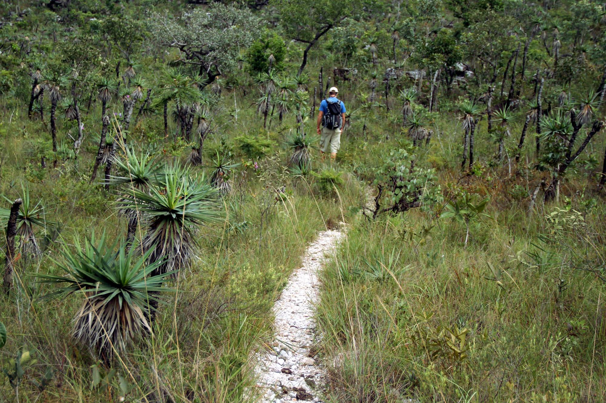 6 trilhas próximas de São Paulo que você não pode deixar de fazer ...