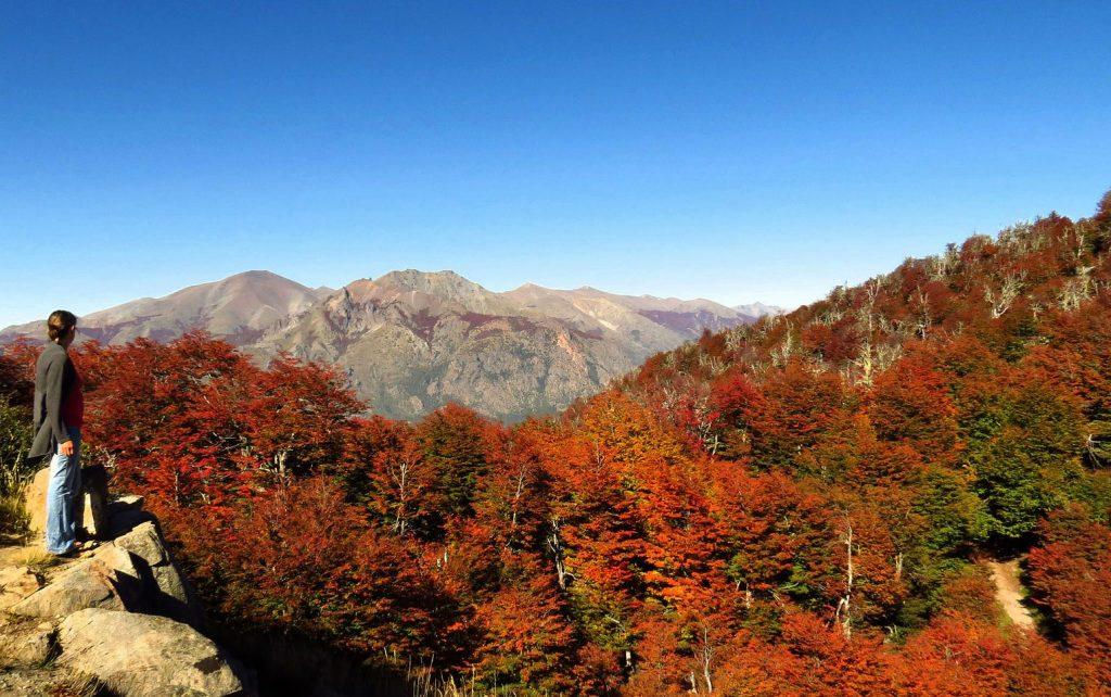 Floresta de lengas, durante o outono, em Bariloche, na Patagônia argentina (foto: Bariloche Turismo/Divulgação)