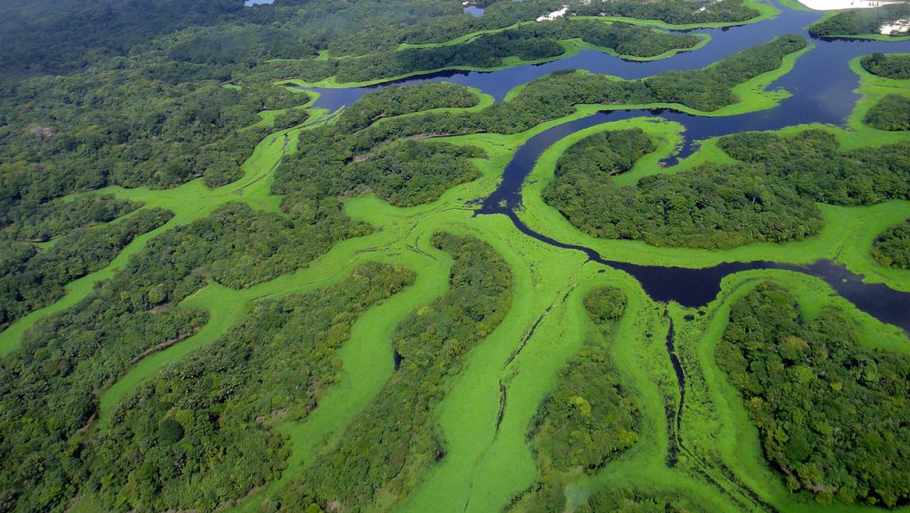 Parque Nacional de Anavilhanas (foto: Lincoln Barbosa/Commons Wikimedia.org)