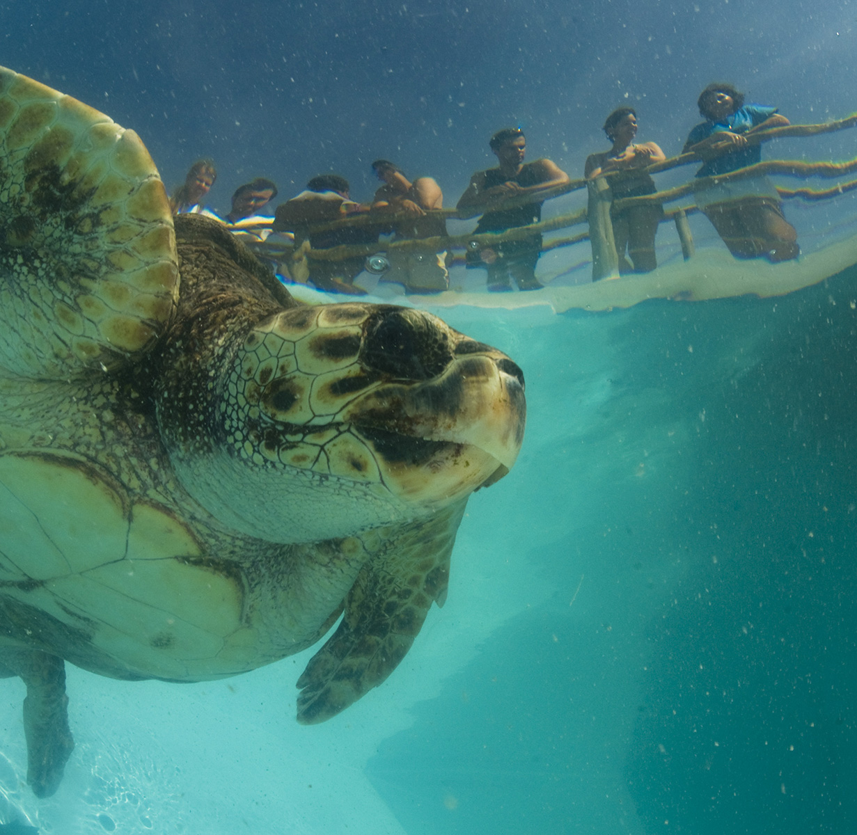 Em funcionamento em São Mateus, no Espírito Santo, esse centro do Tamar da Ilha de Guriri recebe visitantes com atividades como alimentação de tartarugas (diariamente, às 15h) e três tanques de observação com quatro das cinco espécies de tartarugas marinhas que ocorrem na costa brasileira (foto: Projeto Tamar/Divulgação)