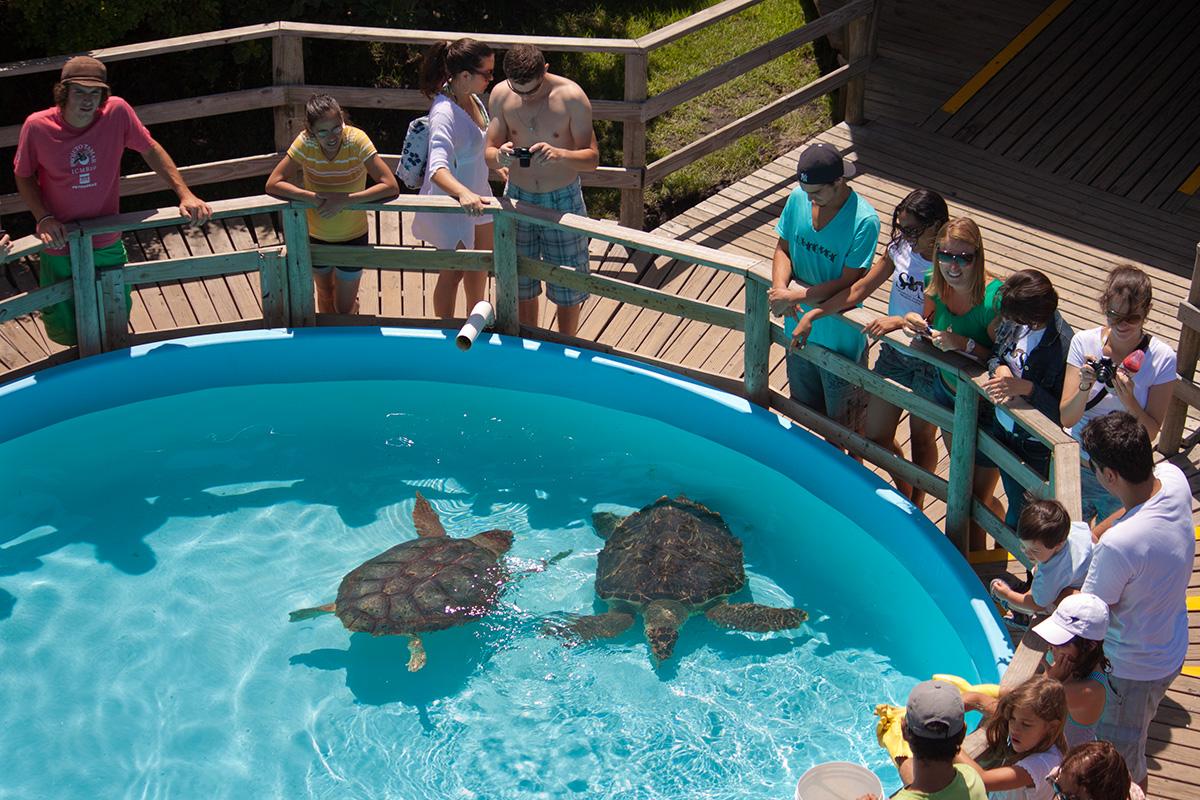 Para minimizar os efeitos predatórios da pesca de tartarugas marinhas, o Projeto Tamar instalou sua base na região, o Tamar Floripa, na praia da Barra da Lagoa, , em 2005 (foto: Projeto Tamar/Divulgação)