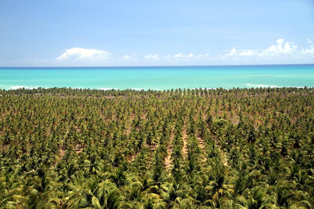 MIrante do Gunga, no litoral sul de Alagoas (foto: Eduardo Vessoni)