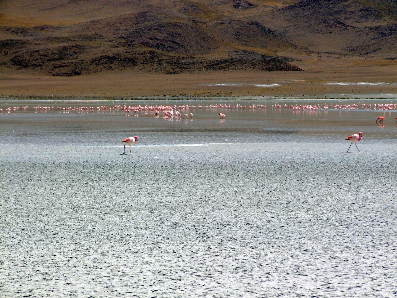 Flamingos na Laguna Hedionda (foto: Eduardo Vessoni)