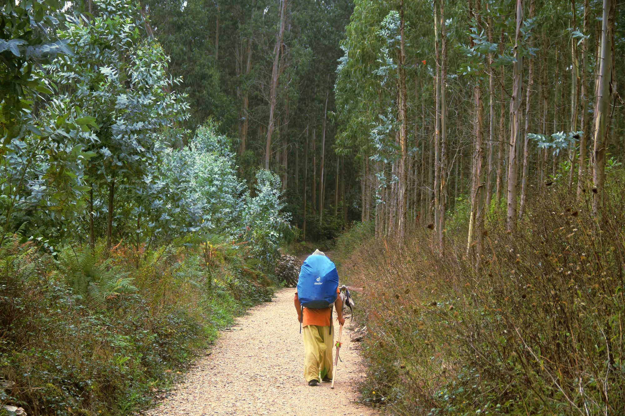 Peregrino segue até Santiago de Compostela, no trecho galego entre Lourenzá e Mondoñedo (foto: Eduardo Vessoni)