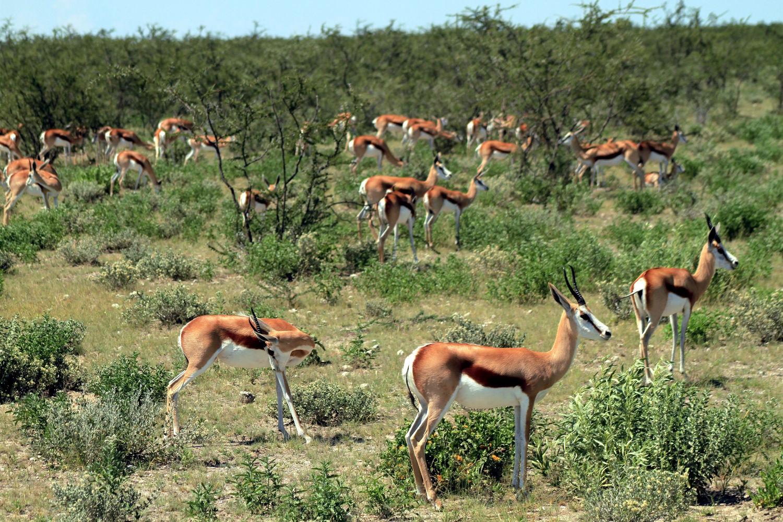 Etosha National Park, na Namíbia (foto: Eduardo Vessoni)