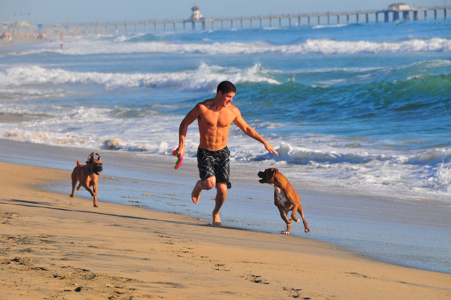 Dog Beach, no Condado de Orange, na Califórnia (foto: Visit Huntington Beach/Divulgação)