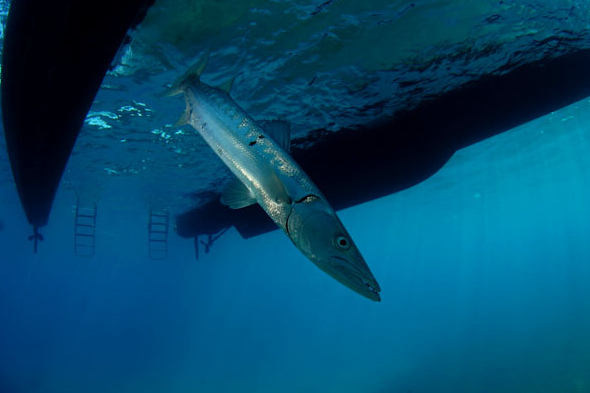 Mergulho na Ressurreta (foto: All Angle/Sandro Rodrigues)