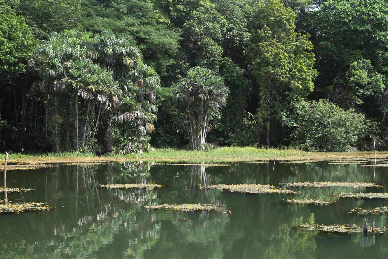 Açude Água Preta, no Parque Estadual do Utinga (foto: Eduardo Vessoni)