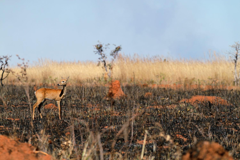8 destinos do Brasil para ver animais em estado selvagem