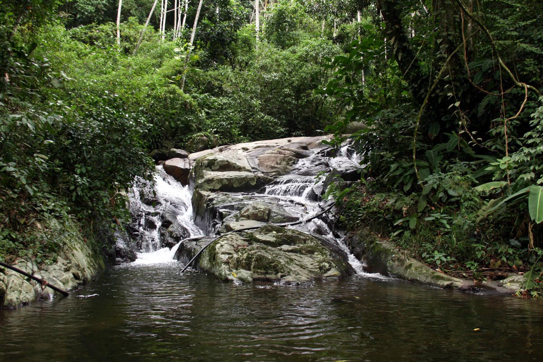 Parque Estadual da Pedra Branca (foto: Wikimedia Commons)