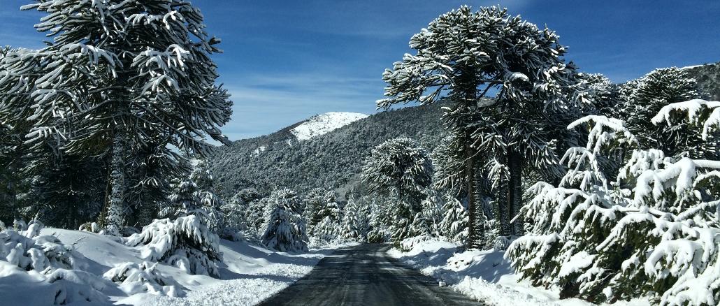 Confira atrações de inverno na Reserva Nacional Malalcahuello, no Chile