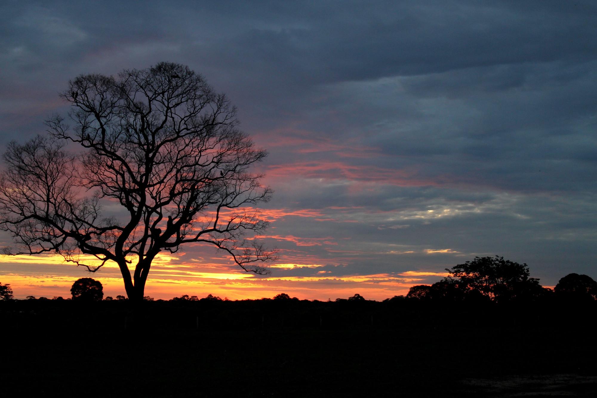 Melhor época para ir ao Pantanal